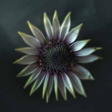 white flower, vintage, close-up