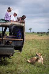 Three tourists and lioness watch one another