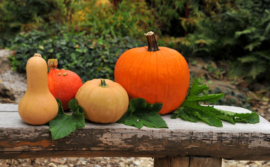 Autumn pumpkins in garden.  Food and decoration.