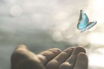 Obraz a delicate butterfly flies away from a woman's hand - fototapety do salonu