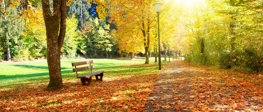 Bench in the park on a sunny day. Autumn landscape.