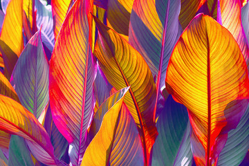 Wall Mural - background of colorful leaves illuminated by the sun