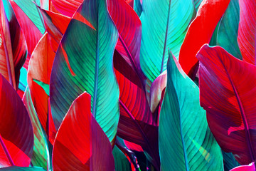 background of red and green leaves lit by the sun