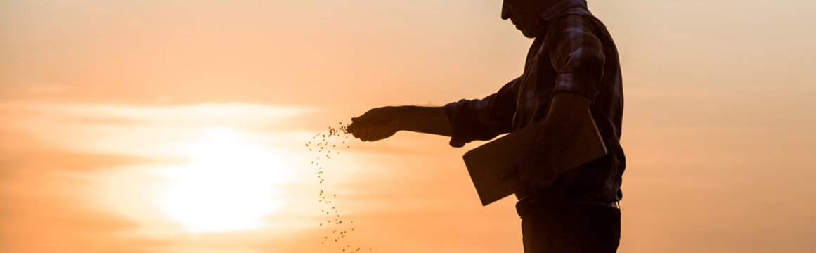 panoramic shot of farmer sowing seeds during sunset