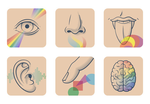 Set of five human senses: sight, smell, taste, hearing and touch. Six anatomical images: nose, tongue, eye, ear, finger and brain