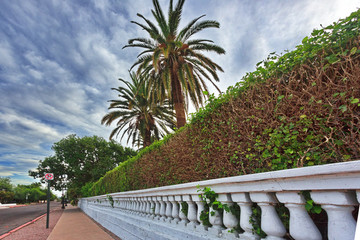 Elegant wall and hedge in Tucson