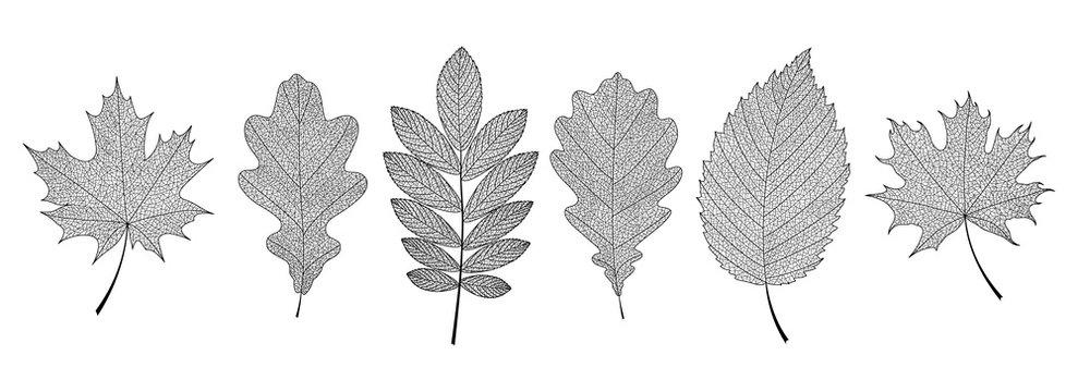 Set of hand-drawn black leaves skeletons. Vector EPS 10.