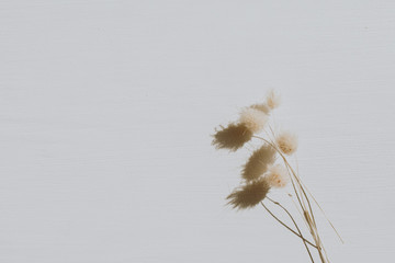 Foto auf Acrylglas Blumen Neutral floral composition with dry flower branch on grey background. Flat lay, top view florist minimal nature concept.