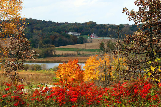 Beautiful autumn rural landscape.Scenic countryside fall view with colorful trees, agricultural fields and scattered farm buildings.Bright color trees and bushes in a foreground.Midwest USA,Wisconsin.