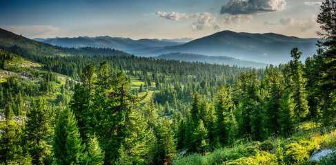 Beautiful sunset view in cedar forest in front of sayan mountain range, Ergaki national park,...