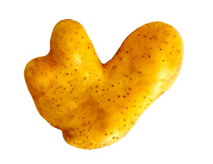 Obraz Ugly potato in heart shape on white background isolated. Funny, weird vegetable. Food waste concept.  - fototapety do salonu