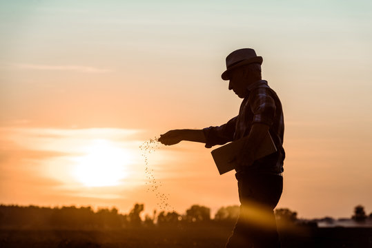 profile of senior farmer in straw hat sowing seeds during sunset