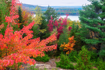 Autumn Foliage in Acadia National Park in Maine