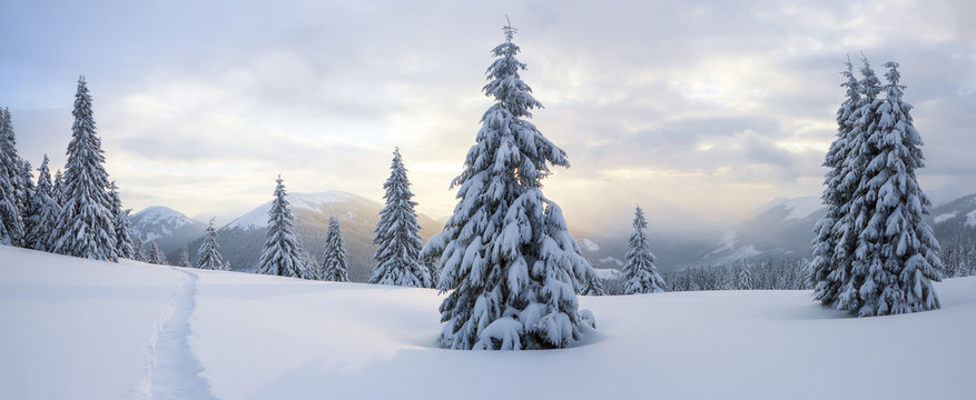 Winter landscape. Spectacular panorama is opened on mountains, trees covered with white snow, lawn and blue sky with clouds.