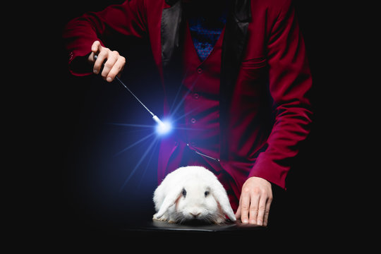 Magician with rabbit and magic wand shows focus