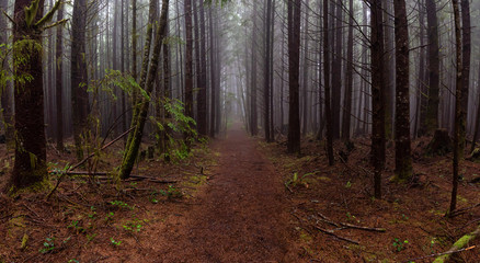 Juan de Fuca Trail in the woods during a misty and rainy summer day. Taken near Port Renfrew, Vancouver Island, BC, Canada.