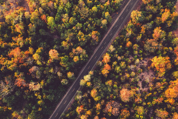 Aerial view of road with colorful forest in countryside