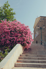 Stairs to church. Propriano, Corsica, France