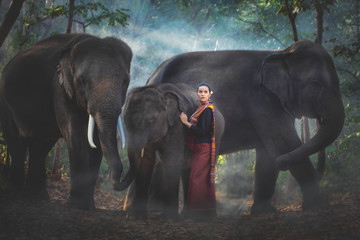 A mahout beautiful girl with her large elephant  herd in the forest.
