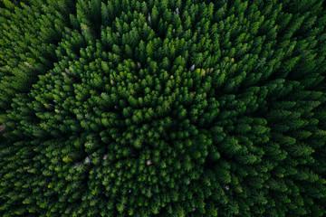 Fotobehang Bomen Forest from above