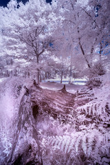 Photo sur Plexiglas Lilas Stunning infrared landscape image of forest in English countryside in Summer with false color processing