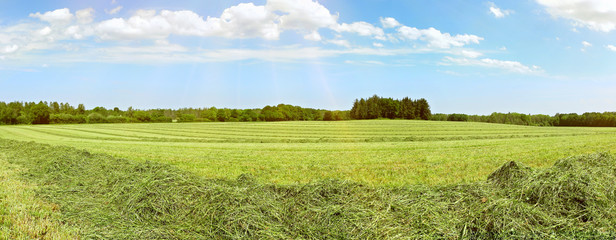 Fotoväggar - Heu auf dem Feld - Panorama