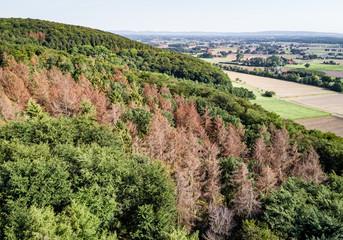 Drohnenfoto - Waldgebiet mit toten Fichten
