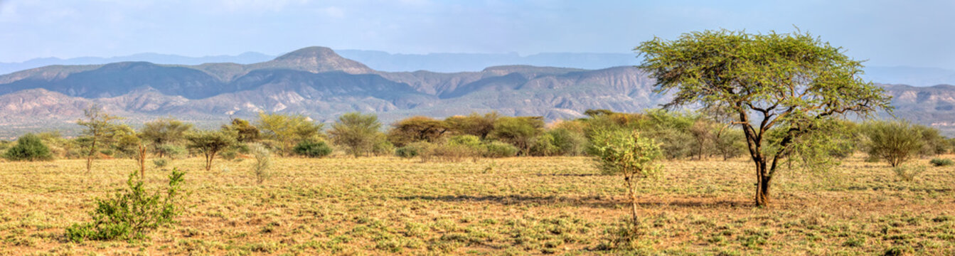 Panorama of Awash national park landscape with acacia tree in front and mountain in background, Awash Ethiopia Africa
