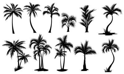 Set of palm trees. Collection of silhouette of palm tree. The contours of tropical plants. Black white illustration of coconut trees. Tattoo.