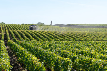 Foto auf Leinwand Weinberg Vines agricultural chemical treatments in spring vineyard being processed in Chateau Margaux in Médoc France