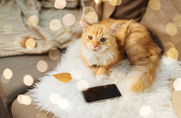 Fototapete - pets, hygge and domestic animal concept - red tabby cat lying on sofa with smartphone at home
