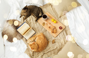 Fototapete - pets, hygge and domestic animal concept - two cats lying on blanket with book, lemon tea and oatmeal cookies at home in autumn