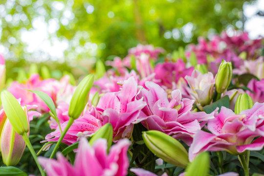 Lily flower bouquet in blossom garden