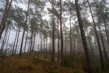 Jesienny zamglony las