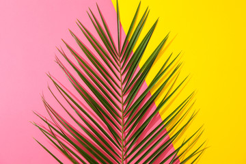Howea palm leaves on two tone background, copy space
