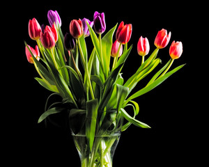 bouquet of red and purple tulips on black background