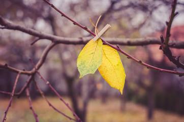 orange autumnal leaves