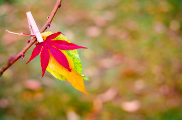 beauty of autumn in nature