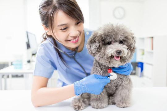 veterinarian at veterinary clinic