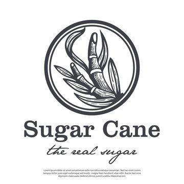 Cane tree vector logo with vintage style