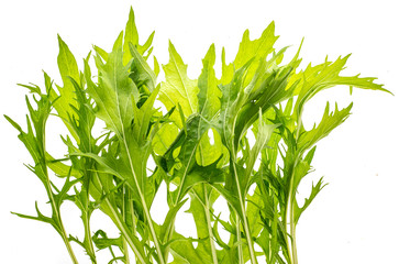 Wall Mural -  mizuna (Japanese mustard green leaves) plant isolated on a white background