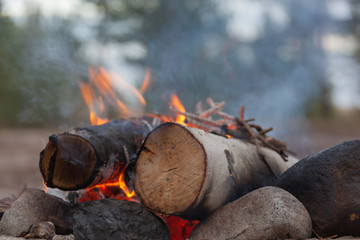 Campfire in camping among pines, active leisure in nature.