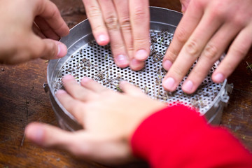 Volunteers help scientists to biologists. They are manually sift using multi-caliber sieves the herb thyme seeds.