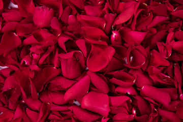Wall Mural - Red rose petals background