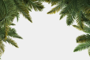 Palm trees isolated. Image useful for banners, posters or photo maipulations. 3d rendering. Illustration