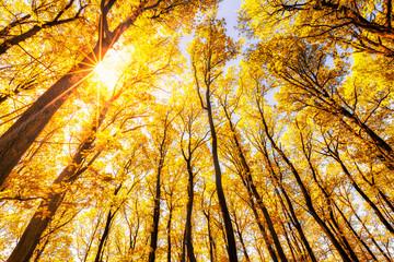 Foto auf AluDibond Orange Beautiful autumn forest in bright sunlight