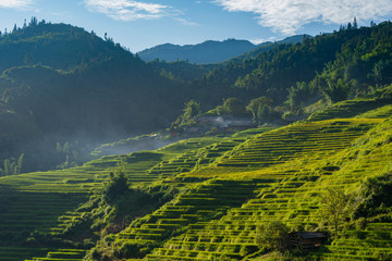 Garden Poster Rice fields Beautiful landscape of rice paddy field terraced at SA PA is the travel destination attraction in Northwest Vietnam