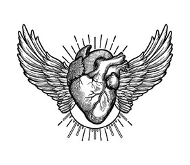 Decorative naturalistic heart with wings.