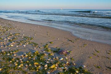 muszelki na plaży, piękny krajobraz nadmorski