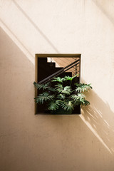 Monstera Plant and Light